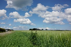 EXPERIMENTING DEPTH OF FIELD WITH MY NEW CAMERA (LARSERAQ) Tags: dof depthoffield postcard field bluesky cumulus sunshine green cornfield sony rx1rm2 rx1rmk2 rx1rmii rx1rmkii carl zeiss sonnar 235 full frame cmos image sensor larseraq aarhus jutland denmark
