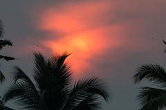 Sunset-Sunrise, Vayalar, Dec 2013 (Peter R Steward) Tags: 4environment 6places india kerala sky sunsetsunrise vayalar exif:aperture=80 camera:model=canoneos70d camera:make=canon exif:lens=150500mm exif:isospeed=800 geolocation exif:focallength=370mm exif:model=canoneos70d exif:make=canon
