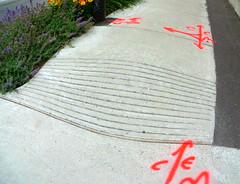 Easy Rider (Robert Saucier) Tags: flowers orange fleurs gris graffiti montral pavement montreal tag sidewalk trottoir easyrider arbuste img3612