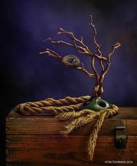 Still Life with Robins Nest (Timothy Thurman) Tags: stilllife lightpainting tree still nest fineart rope creativelighting