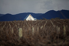 IMG_9878a (ManFromOz) Tags: vineyards mudgee gemaxphotographics geoffsmith