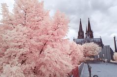 DSC02614 (FritzchensFritz) Tags: kln nordrheinwestfalen deutschland infrarot infrared ir645 heliopan falschfarben false colors
