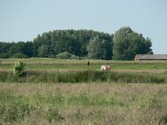companionable silence (achatphoenix) Tags: rural eastfrisia enroute ostfriesland fields pasturage farm bird companionablesilence