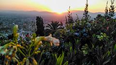 Blossom. (nvribeiro) Tags: chile flower flor flores spring primavera mountain entardecer sunset santiago