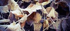 In the Wood (Arianna PH) Tags: valpolicella veneto bosco rugiada wood prato verde natura foglie
