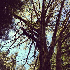 Looking up in Lynn Canyon (Lynn Canyon Ecology Centre) Tags: lynncanyon