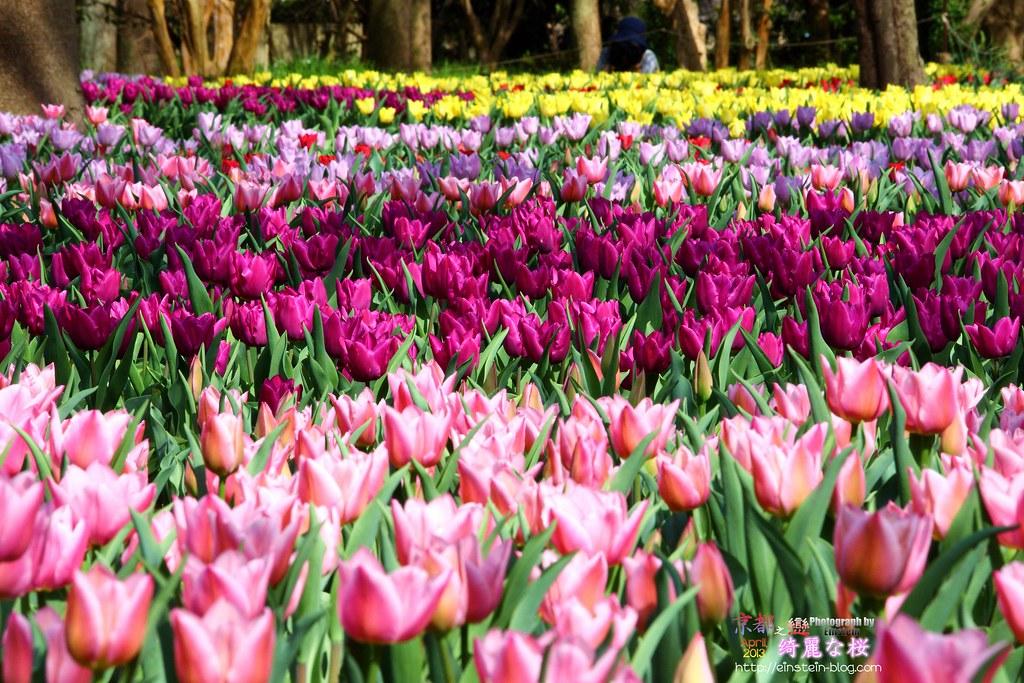 2013-04-05-13h45m47IMG_2582