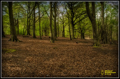 Forrest of Alkrington (mikesteph0) Tags: tree nature woodland scenery natural outdoor foliage leafs
