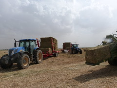 Plegamatic Self-loading Bale Trailers in Turkey 2013 (Plegamatic) Tags: auto horse france john wagon big corn jcb trkiye straw stack trailer hay bales economic loader bale paja deere baron collector saman stalks ballot stroh bottes foin  paille balles halm ballen biomass reliable balen stacker samling remorque olki balya otomatik tama selfloading makinasi hacina autochargeuse zmleri plegamatic luzrne ballenladewagen samlevogn stakning stoverx strx szalmax toplamax transballesx x somax x x x accumulatorx