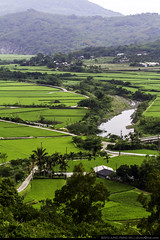 Rice Country (olvwu | ) Tags: cloud mountain green field grass creek landscape countryside village rice cloudy path farm taiwan overcast valley ricefield hualien     fuli  jungpangwu oliverwu oliverjpwu       hualiencounty jungpang fulitownship