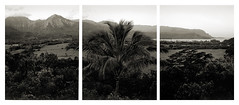 kauai sunrise 3 shot pan (adamcostello) Tags: trix 4x5 pan toyo45