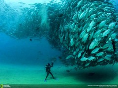 National Geographic under water (E-GOnile Tours Egypt) Tags: redsea egypt sharm hurghada safaritrips adventuretoursegypt saharmelsheikh