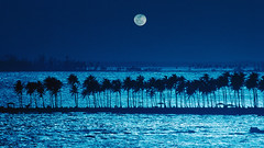 58784 (Cornel Irimia) Tags: travel blue sea sky moon tree latinamerica water silhouette evening bay puertorico background jetty nobody palmtree caribbean backlit copyspace atlanticocean clearsky darkblue caribbeansea northatlanticocean atlanticislands greaterantilles marinescene
