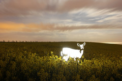 Journey (JamesStreeterphotography) Tags: longexposure nightphotography blue light england lightpainting west green yellow night dark painting photography graffiti sussex stencil long exposure glow westsussex deer lp lightgraffiti lightstencil