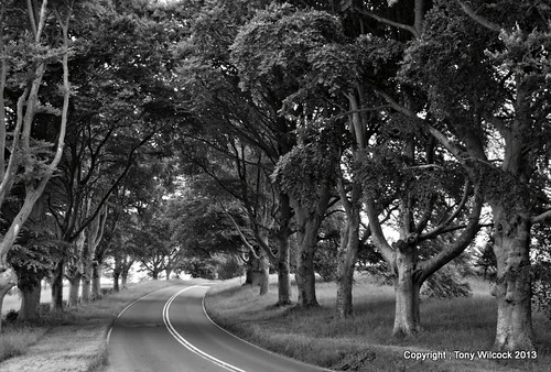 Beech avenue - Kingston Lacy