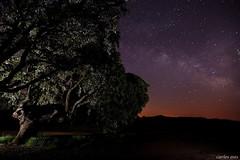 gigantes de la noche (navarrito79) Tags: longexposure light lightpainting tree night stars arbol noche nikon arboles cielo estrellas nocturna carrasco rioja nocturne milkyway larioja encina largaexposicin d600 valctea carrascal villarroya carlososes nikkor1635