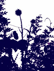 darkthistles (LauraSorrells) Tags: blue shadow wild silhouette jasper thistle may meadow deep 2008 mineralspringsroadmeadow