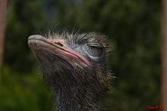 L'offesa (Nikon D600) (BeSigma) Tags: zoo nikon natura animali d600 fattoria