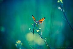 Just Beautiful.. (icemanphotos) Tags: flower flowers butterfly bokeh bokehlicious naturallight sunlight 50mm18 interesting dream dreamy zen mood magical blue colors orange green bravo icemanphotos canon