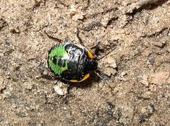Weird Bug (L Westy) Tags: arizona bug sedona hike unknown oakcreekcanyon