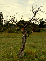 Ein-Apfel-Baum (kaktus83) Tags: