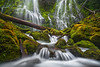 Proxy (posthumus_cake (www.pinnaclephotography.net)) Tags: green nature oregon zeiss landscape waterfall moss vibrant or pacificnorthwest verdant cz cascade pnw ze proxy carlzeiss proxyfalls distagont2821