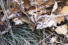 2015 Nachtfrost (jeho75) Tags: winter detail ice leaf