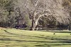Sunny Day at Audley Park (everyday sh⊙_☉ter) Tags: park beach forest sydney waterfalls kookaburra wattamolla garie royalnationalpark audley stanwell hackerriver
