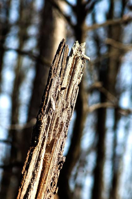 Selma Steele Nature Preserve - March 21, 2015