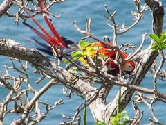 hula hoop sat 055 (Learn, Love, Conserve) Tags: hulahoop saprissa puntaleona feriaverdearanjuez