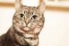 Senor Miow (Fieldy.) Tags: cat kitten kitty miow meow chat neko gato mace katu kот mačka котка gat kočka kat kass kissa katze γάτα macska köttur gatto kaķis katė мачка qattus katt kot pisică кот кіт cath קאַץ կատու pişik বিড়াল 猫 貓 კატა બિલાડી बिल्ली miv ネコ ಬೆಕ್ಕು мысық ឆ្មា 고양이 പൂച്ച मांजर муур ကြောင် බළලා гурба பூனை పిల్లి แมว بلی mushuk conmèo fieldym fieldy matthewfield matthewfieldphotography