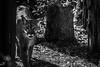 Florida Panther (awdylanis) Tags: beautiful tampa walking zoo woods florida february puma cougar stalking pather lowryparkzoo 2015 floridapanther ampa