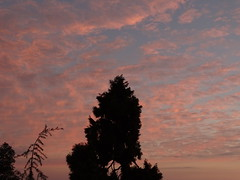Pink Clouds ! (rick_toor) Tags: travel pink winter sunset sky india tree nature beautiful clouds lens photography evening flickr colours sony hill tourist dharamshala mcleodganj himachalpradesh sonydschx400v ricktoor