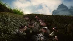 Mushrooms (Samuel Detoni) Tags: beautiful mushrooms pretty small hd tes realistic skyrim