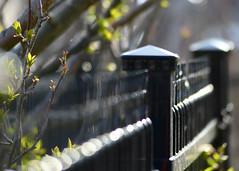 Promise (nikagnew) Tags: fence hope spring soft bokeh dream dreamy optimism budding hopeful leafbuds tiredofwinteralready