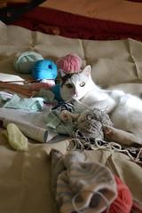 thea e la lana (ELENA TABASSO) Tags: cats lana cat gatto gatti animali