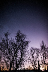 Light Pollution (Ryan Paulsen Photography) Tags: trees winter sky ontario canada cold night rural stars landscape country astrophotography ottawavalley