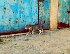 Searching food, home, love. (Yonit Segal) Tags: food love home cat joy searching homelesscat