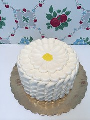 IMG_0502 (littledaisybaker) Tags: cake daisy ladyfinger