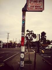 Oakland (therealshawnshawn) Tags: slaptag