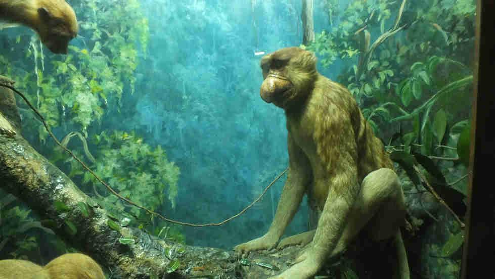 Bogor Zoology Museum
