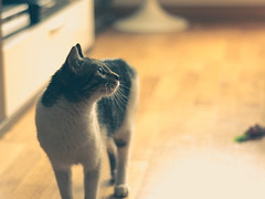 Lolita (KitosRD) Tags: cat 50mm nikon lolita gato segovia gata 18 nikond90