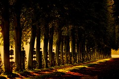 """ Douce France, cher pays de mon enfance..""C.Trenet (Marie.L.Manzor) Tags: morning trees france nature backlight forest sunrise wow landscape alley nikon path versailles nikkor brilliant marielmanzor nikon610"