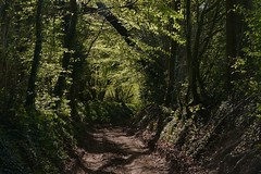 Light and shadow. (Englepip) Tags: trees light shadow sunlight green leaves path shade lane newgrowth undergrowth
