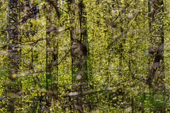 Park Life 33 (pni) Tags: park light tree suomi finland leaf helsinki branch centralpark multipleexposure trunk helsingfors tripleexposure multiexposure keskuspuisto skrubu pni centralparken pekkanikrus
