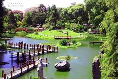 Jardn Japones (LEJZA) Tags: verde green landscape lago buenosaires shine paisaje verano jardinjapones