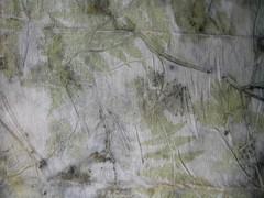 herbe a robert fougre sur soie
