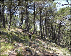 Down Through The Pines (Mabacam) Tags: mountain mountains pine walking landscape outdoors countryside spain view hiking country andalucia trail moorish vista 2016 pinewoods cerroverde canillasdealbaida parquenaturalsierrasdetejeda lafabricalaluz