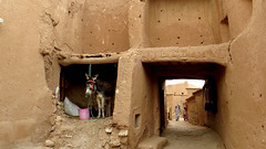 Donkey in the Kasbah (macloo) Tags: travel animals architecture rooms donkey morocco kasbah kser