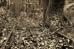Track Two Blocked (95wombat) Tags: old bw monochrome historic westvirginia derelict decayed nuttallburg
